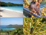 Seychelles, Praslin, Anse Lazio
